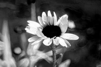 Flowerredone